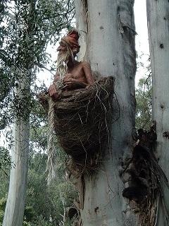 Nesting Gnome.jpg